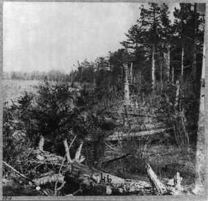 Saunders Field, The Wilderness