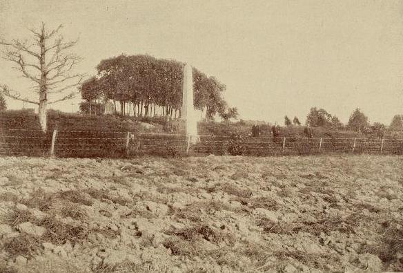 Clump of Trees Gettysburg
