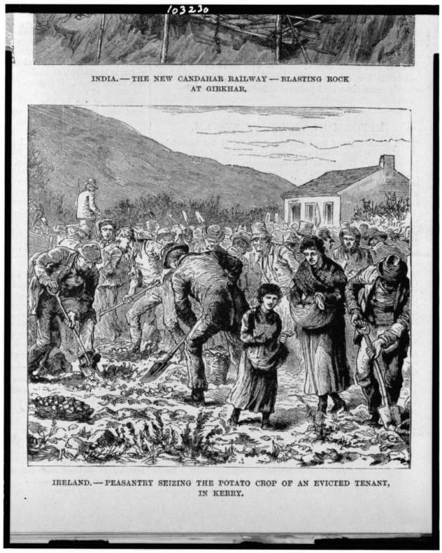 Seizing the Potato Crop of an Evicted Tenant (Library of Congress)