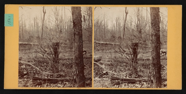"""""""Spot where Gen. Wadsworth, USA, fell. Shattered tree struck by same shell that killed his horse"""" (Library of Congress)"""