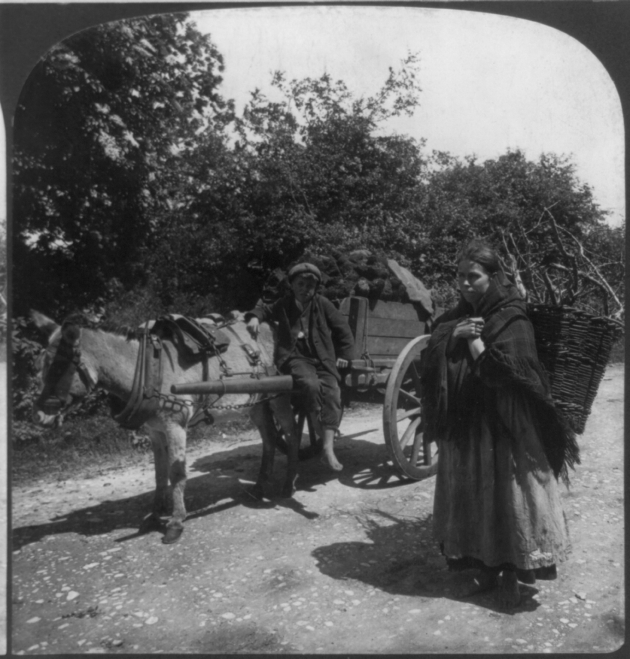 Turf being taken home in Kerry at the turn of the 20th century. A scene that would have been familiar to Charles (Library of Congress)