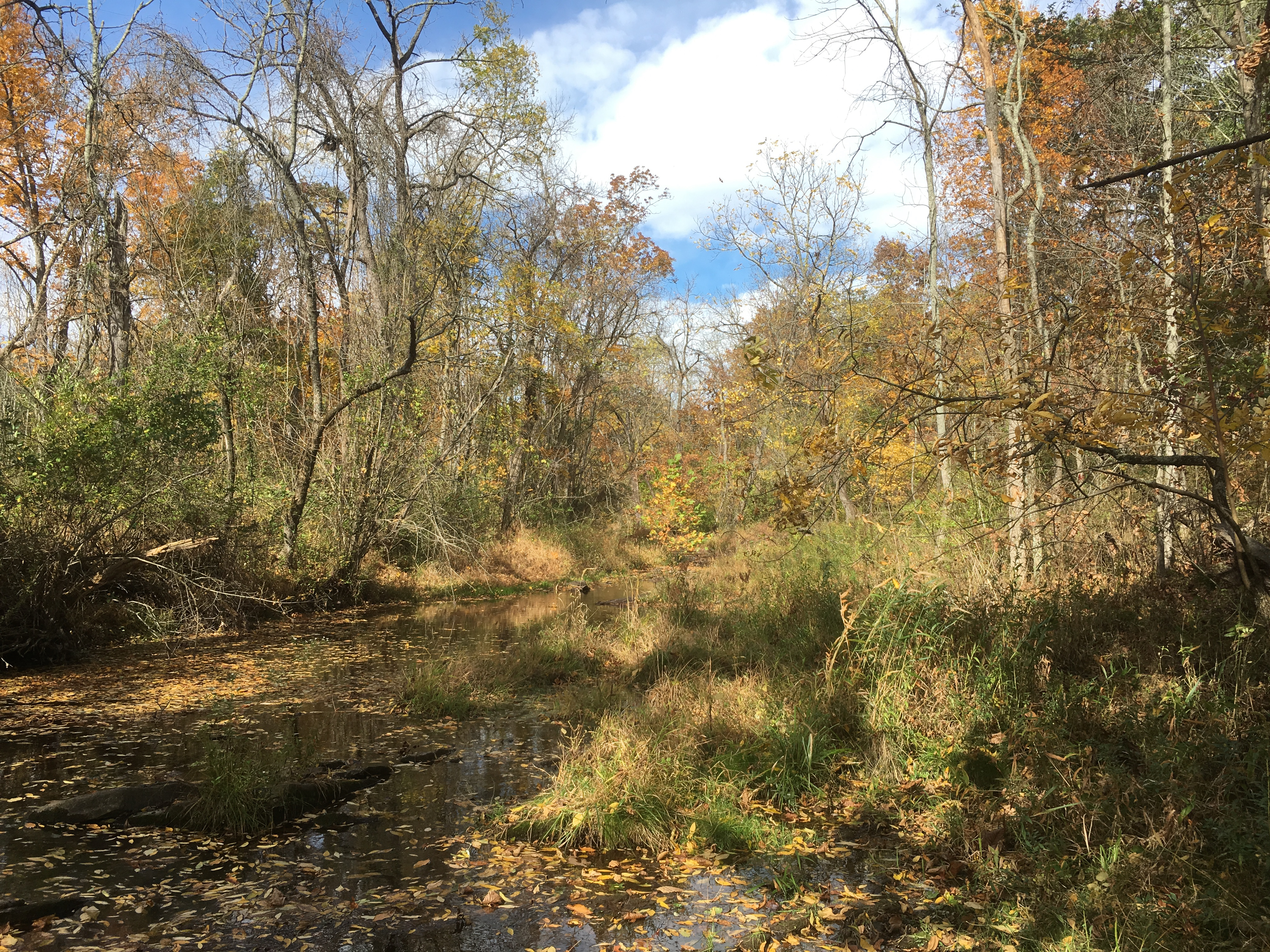 Willoughby Run, across which Patrick Maloney and other members of the Second Wisconsin advanced on their way to capturing Brigadier-General Archer (Damian Shiels)