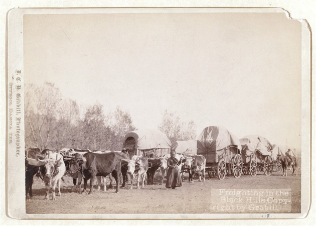 Freighting in the Black Hills, a profession followed by Francis Fox in civilian life (Library of Congress)